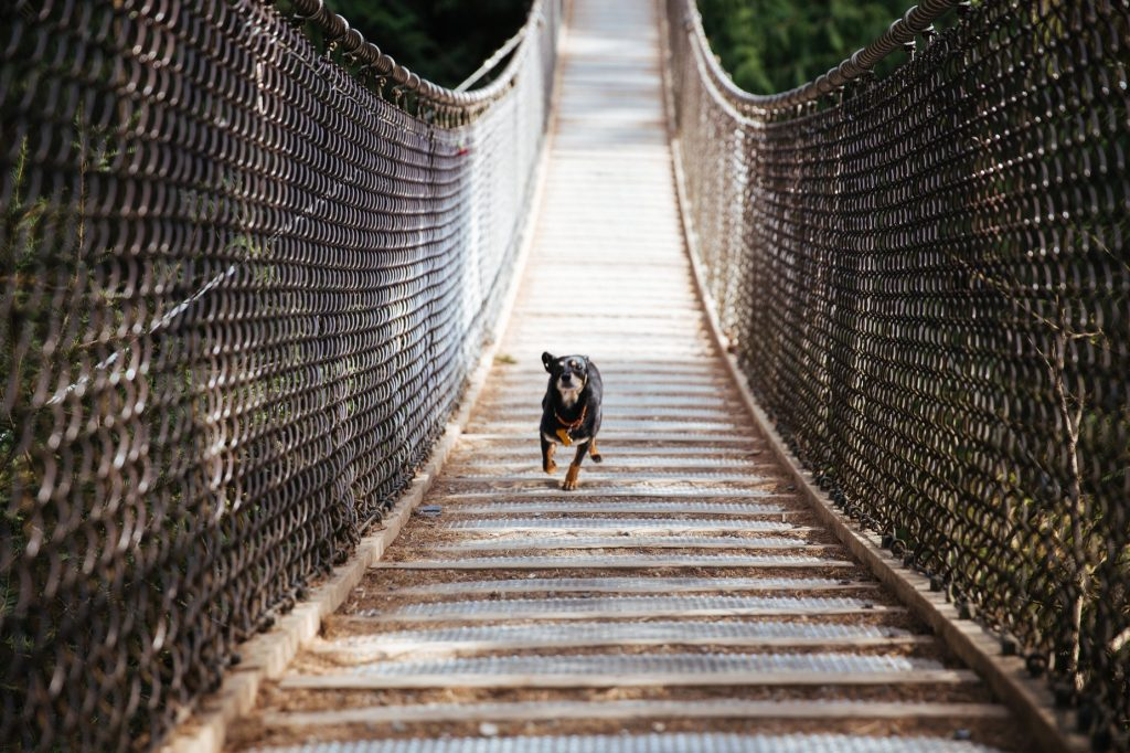 dog-runs-across-bridge_925x@2x