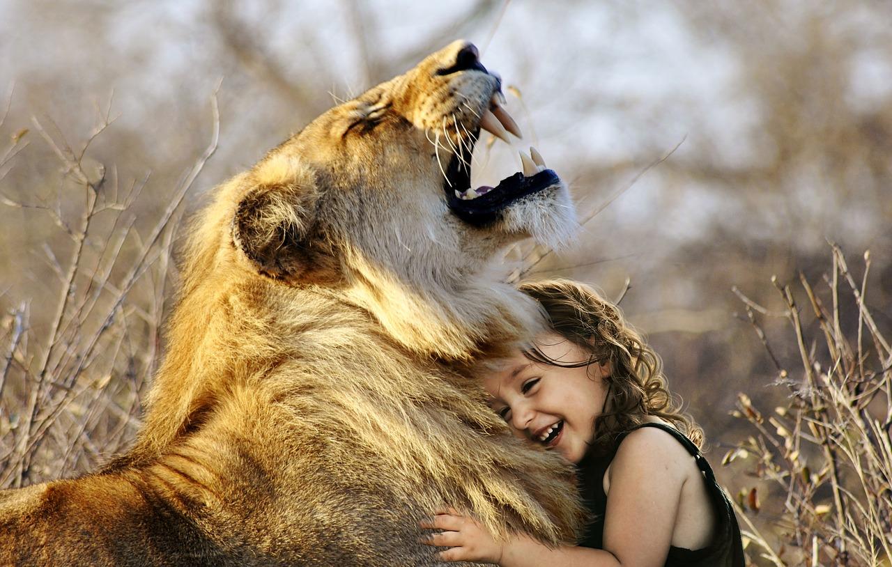 lion-3012515_1280